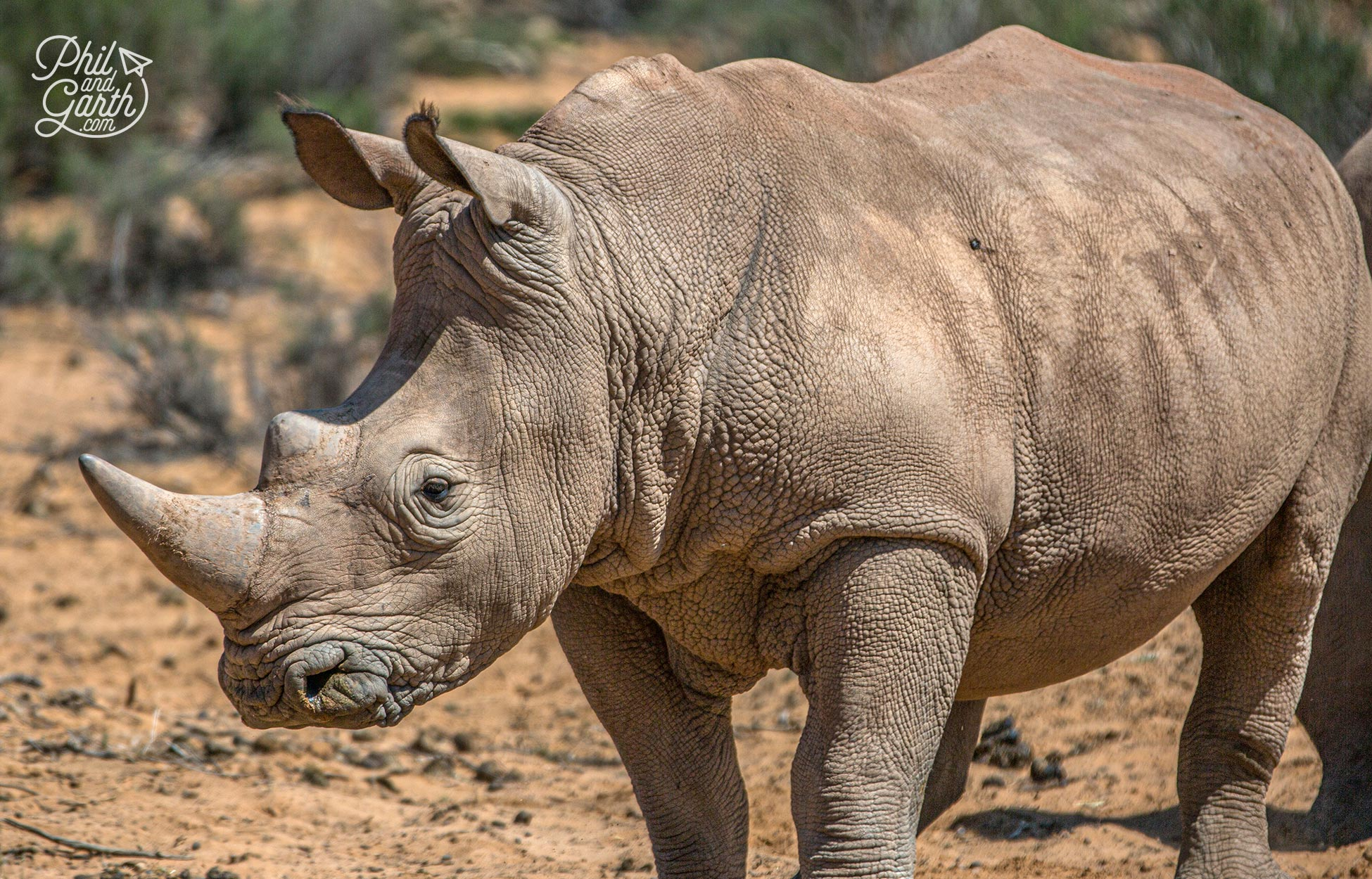 We got very close to this rhino