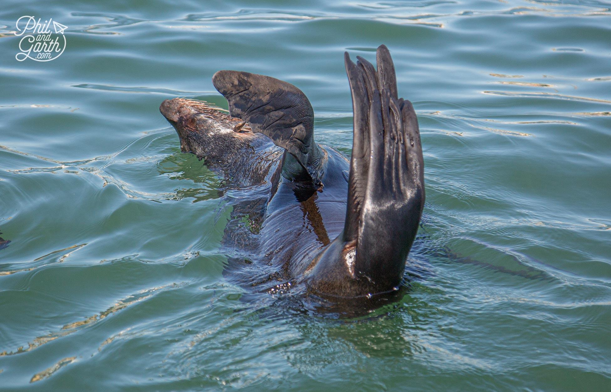 Seals having fun in the harbour water