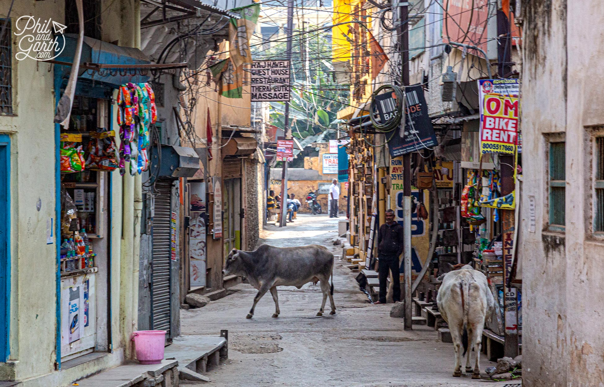 Don't be surprised to see holy cows wandering around the streets