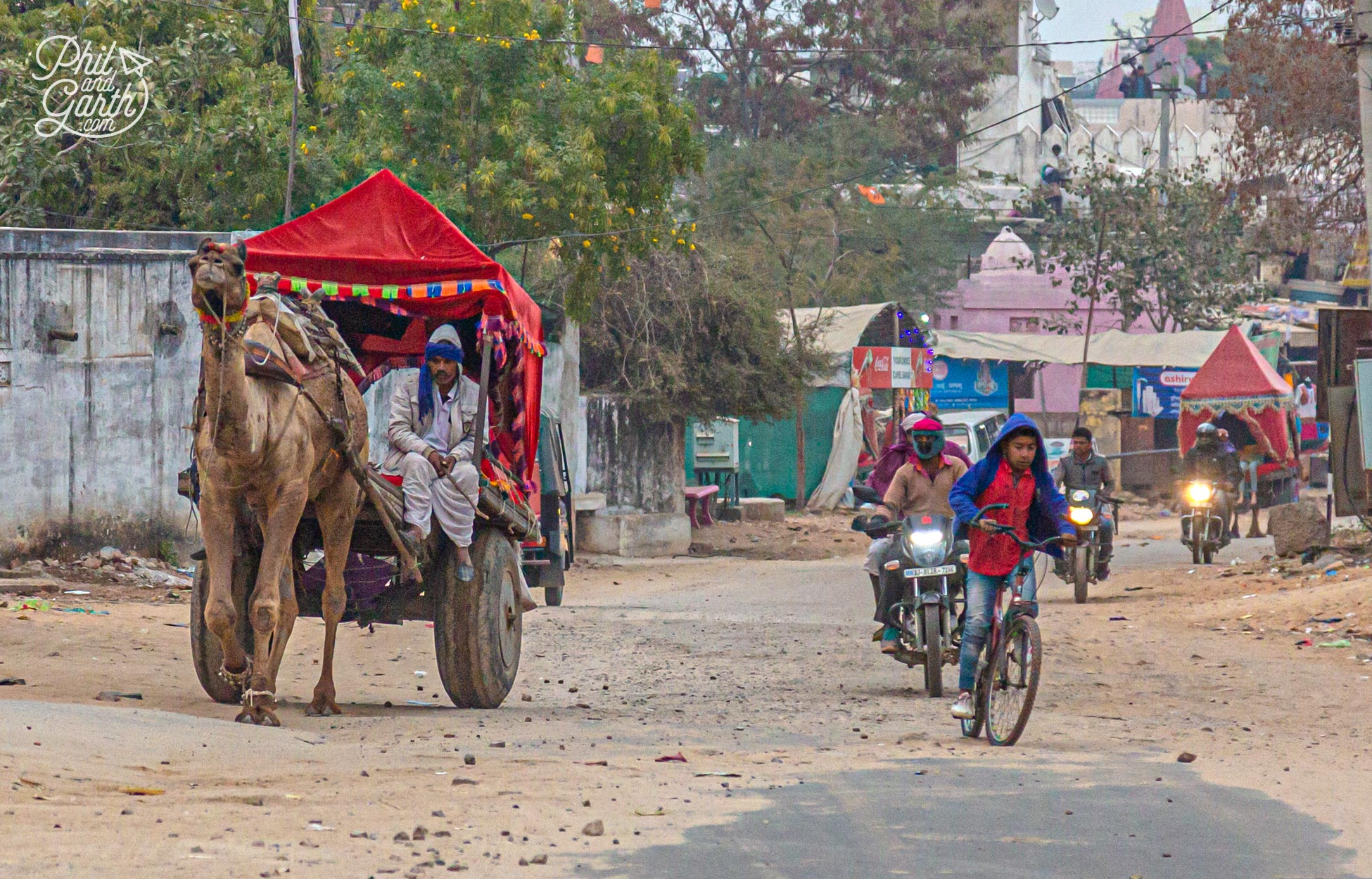 Expect to see lots of camels on the roads in Pushkar