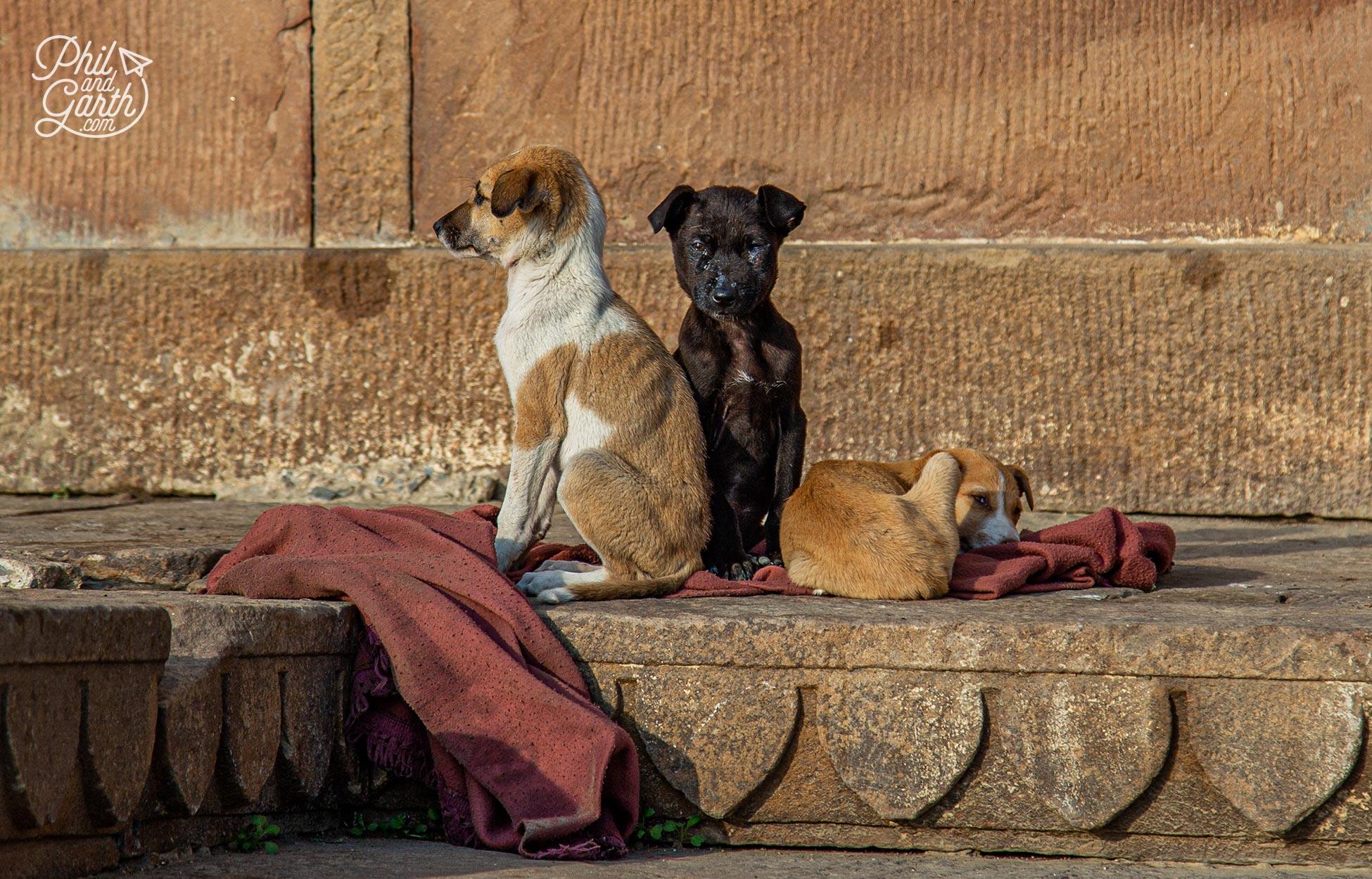 So many stray dogs on the ghats of Varanasi