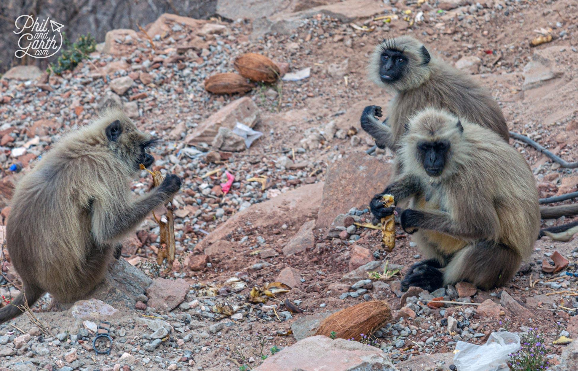 The monkeys love bananas and coconuts!