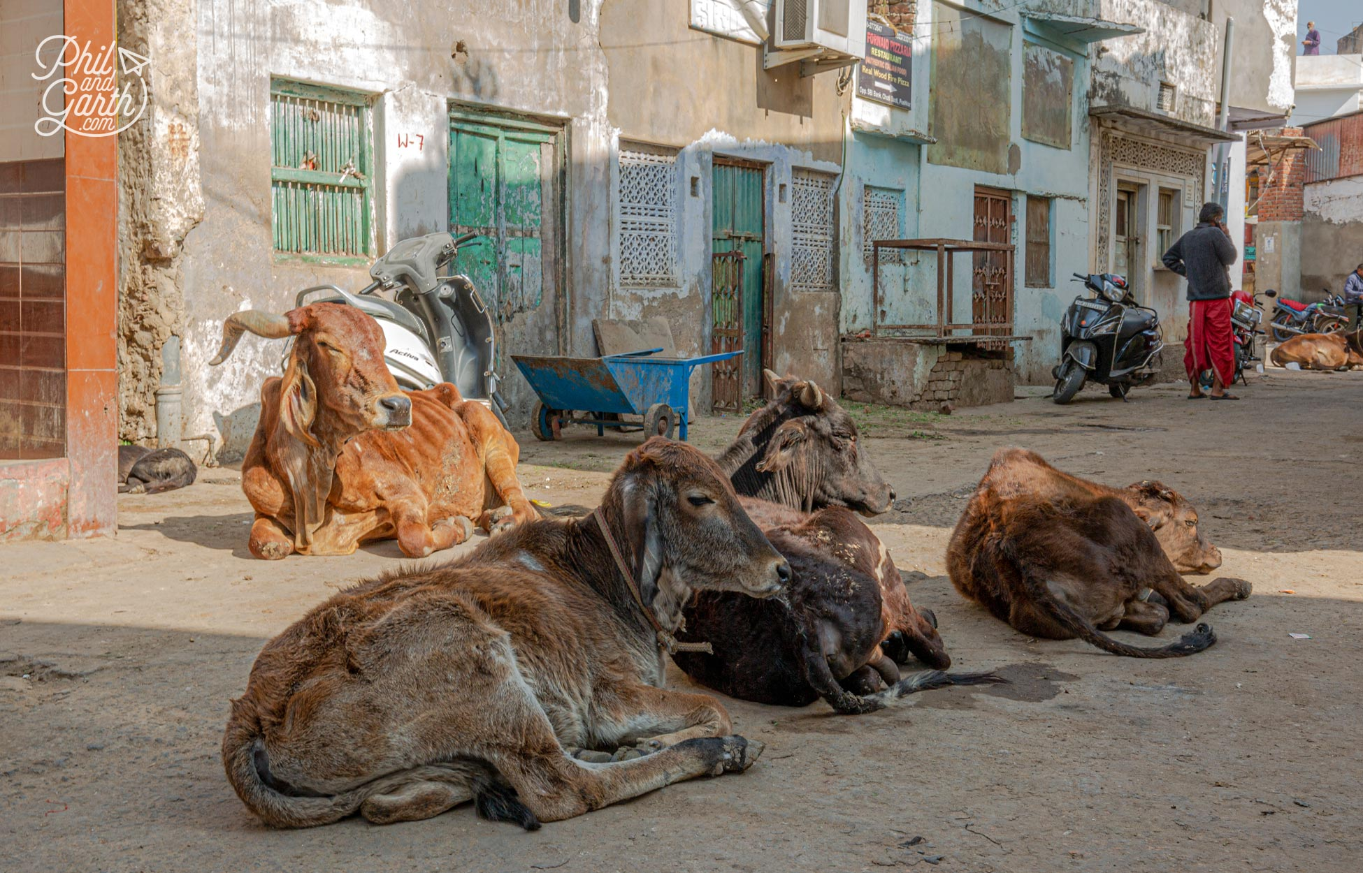 We found this group of holy cows resting in a back street