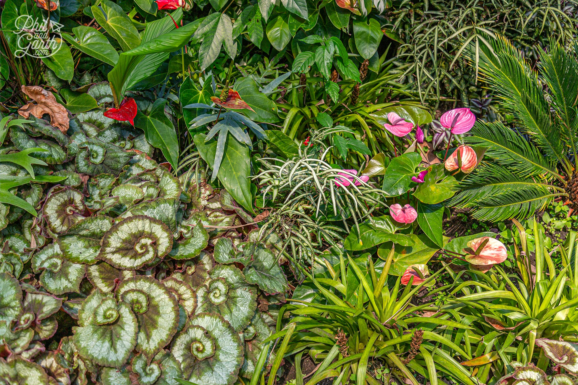 How gorgeous is this combination of tropical plants and flowers