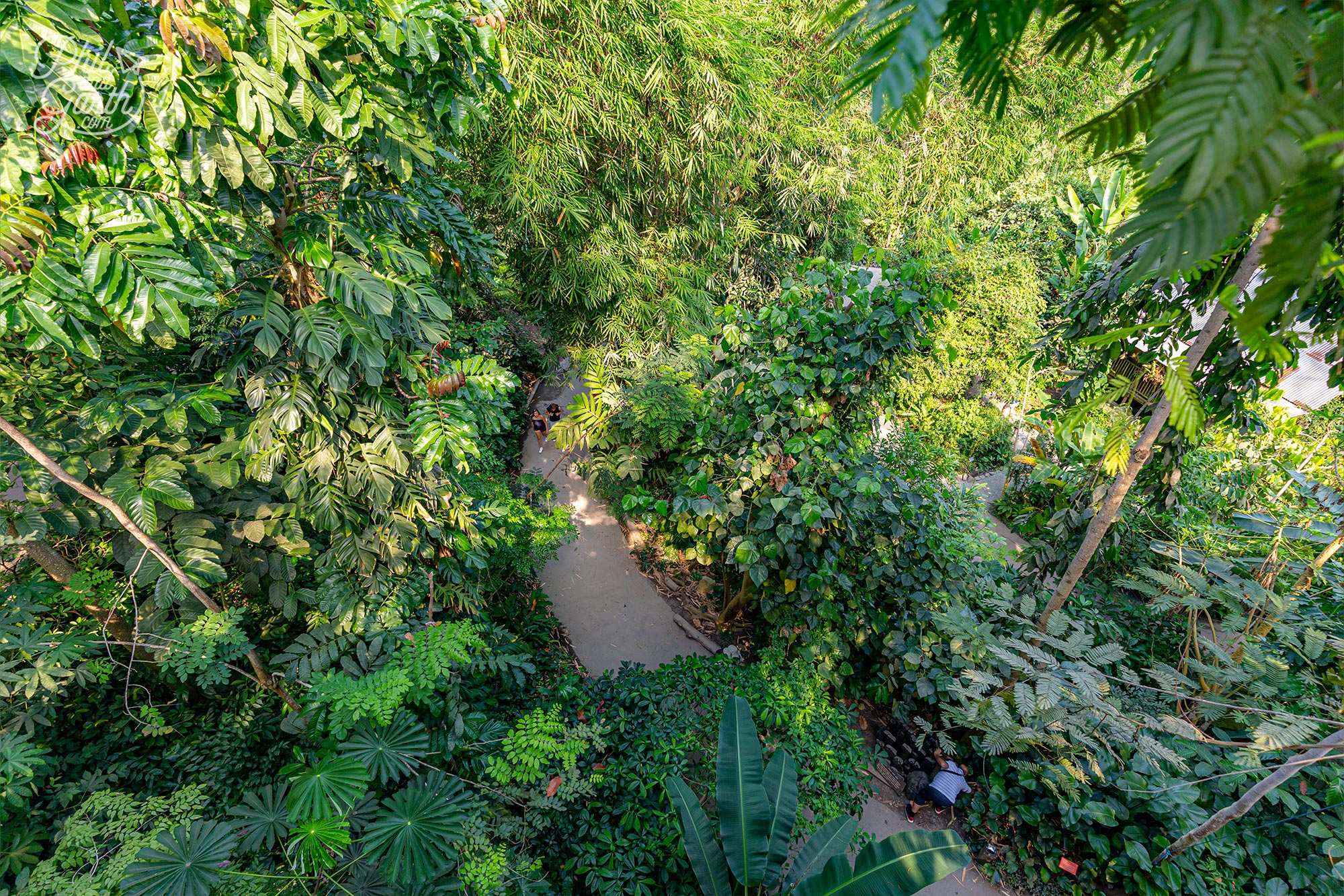 Looking down on the plants and trees from the Rainforest Canopy Walkway