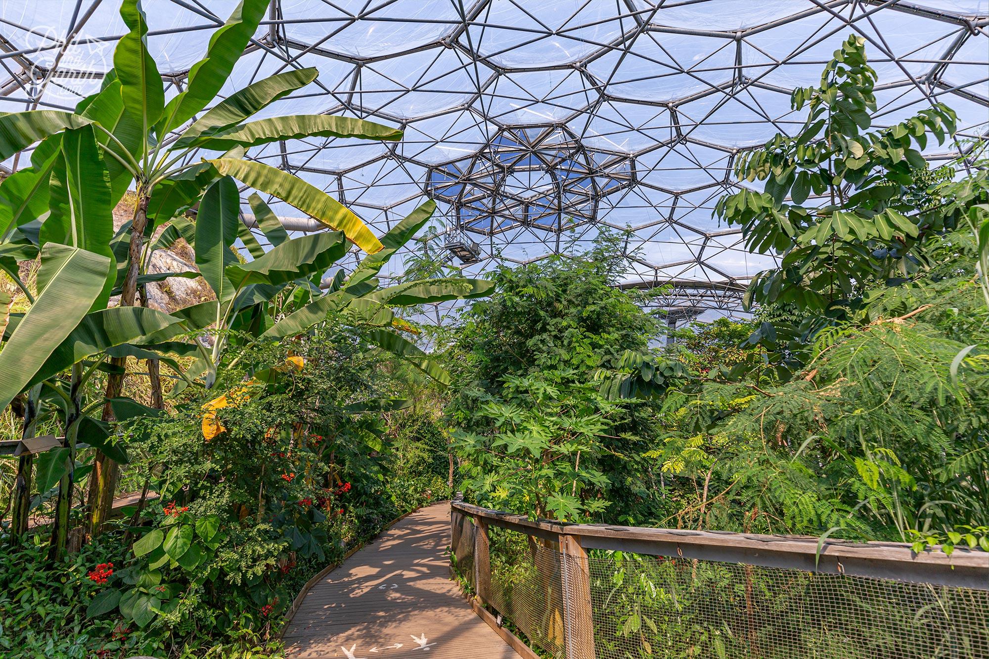Looking across at te Rainforest Canopy Walkway