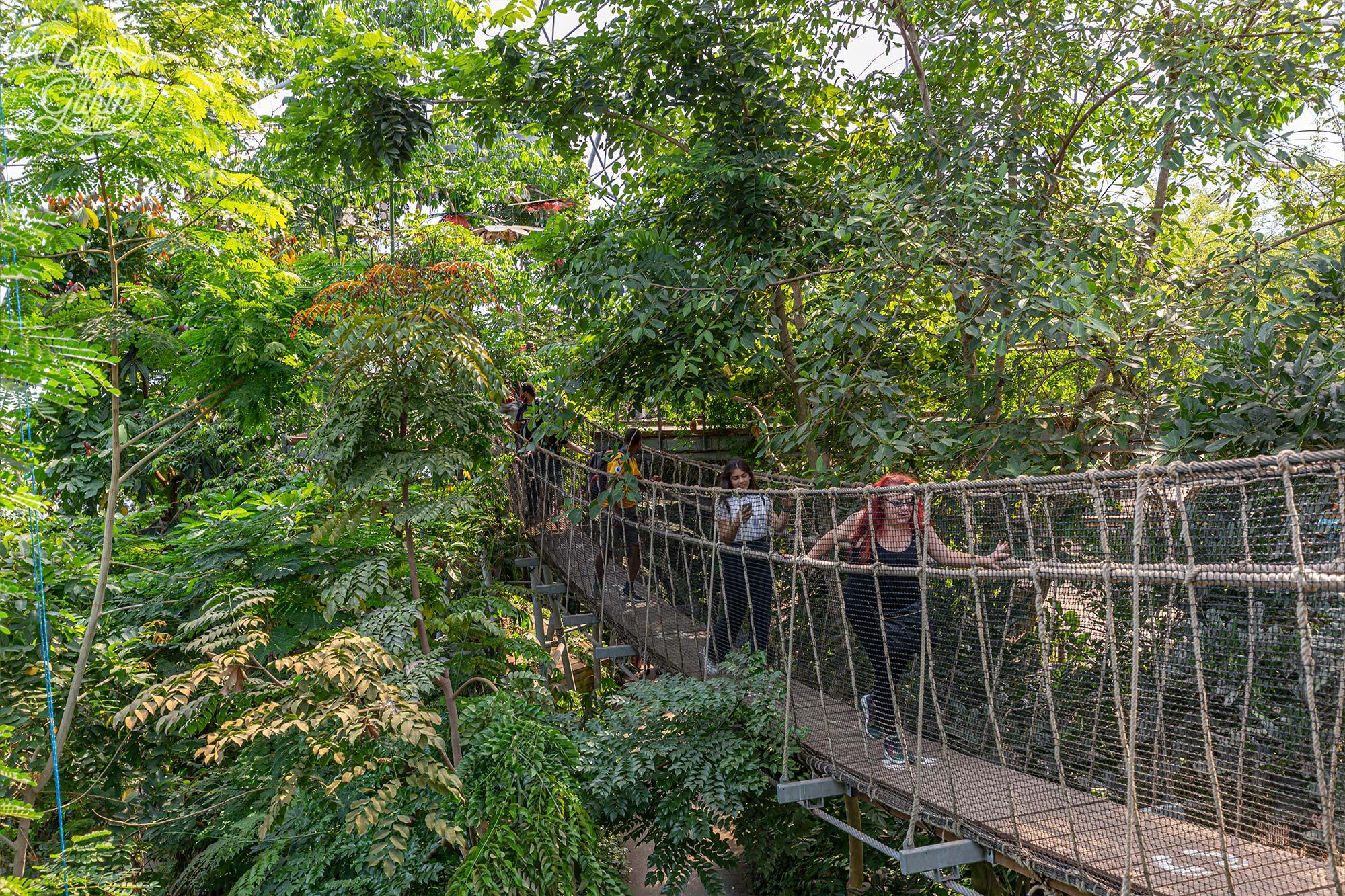 The Wobbly Bridge inside the Rainforest Biome