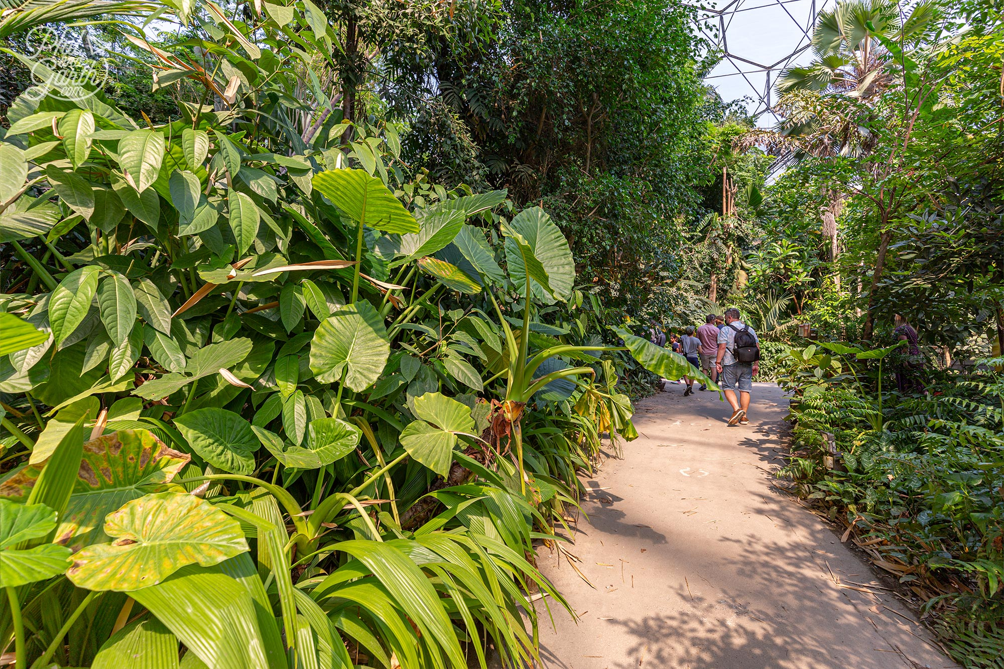 The path guides visitors through all the attractions of the rainforest biome