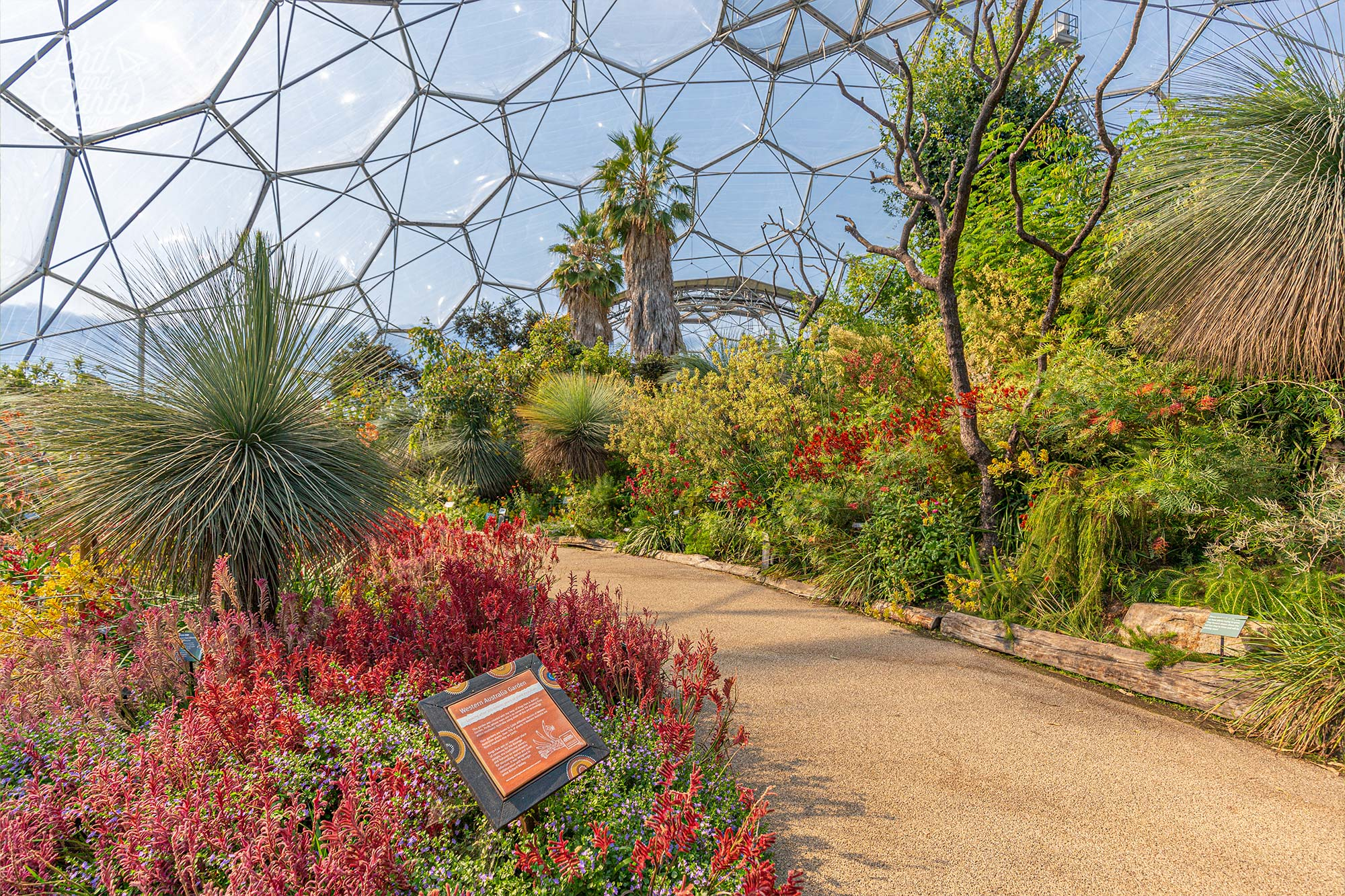 The colourful Western Australia garden inside the Mediterranean biome, Eden Project